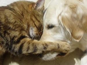 0dog_cat_love